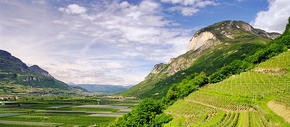 A beautiful view of vines in a valley of South Tyrol