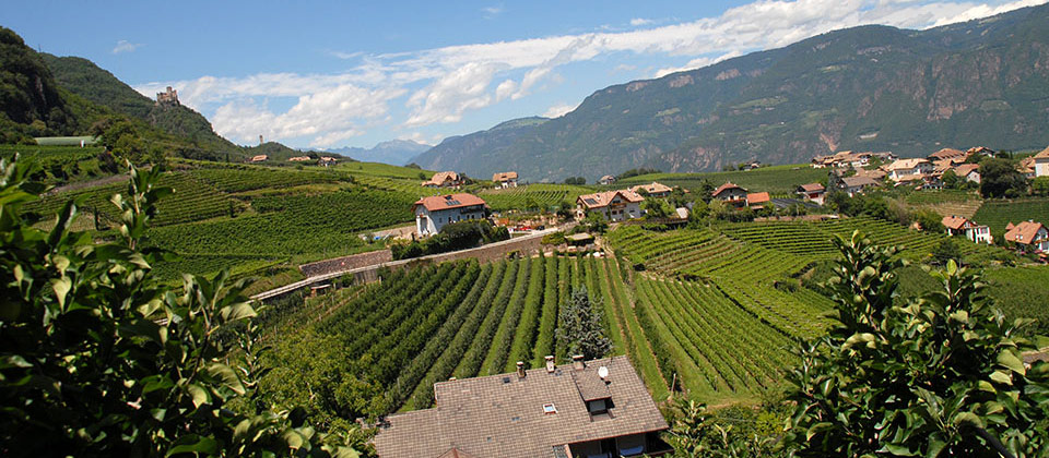 Bolzano and surroundings in-between vines and fields