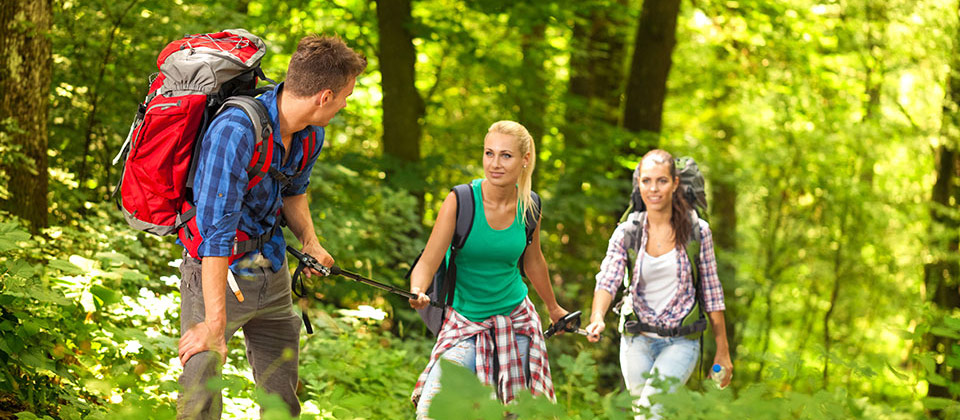 A group of young persons trekking in the woods of South Tyrol