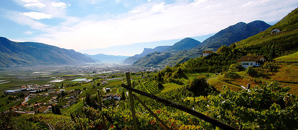 Vines overlooking Merano and surroundings